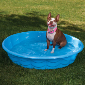 dog sitting in a kiddie pool in shaded area